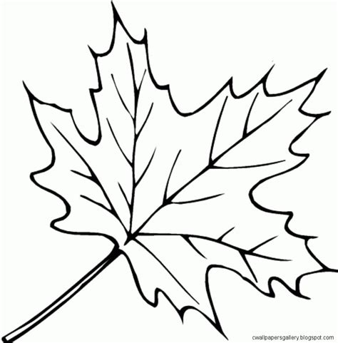 Coloring Leaves by Autumn Leaves Drawing Wallpapers Gallery