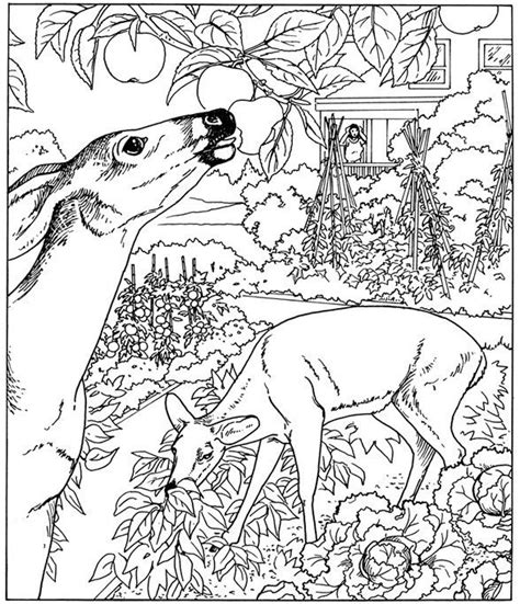 nature coloring pages  adults parts   plant