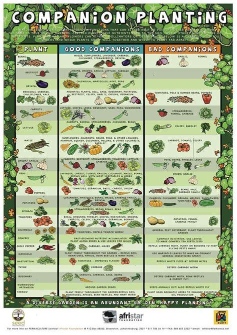 companion planting chart growin crazy acres