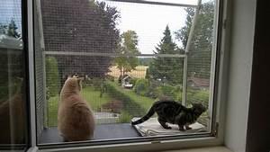 Katzenbalkon katzenbalkone for Feuerstelle garten mit balkon absturzsicherung katzen