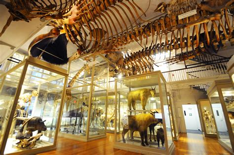 Boston Museums  The Definitive Tripscout Travel Guide