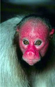 World Most Ugly Monkey Pictures   Ugly Pets