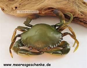Tierfiguren Aus Kunststoff : deko krebs als strandkrabbe ca 13 x 10 x3 cm aus weichem kunststoff ~ Yasmunasinghe.com Haus und Dekorationen
