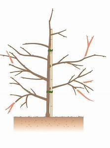 Kirschbaum Richtig Schneiden : apfelbaum schneiden tipps f r jede baumgr e garten ~ Frokenaadalensverden.com Haus und Dekorationen