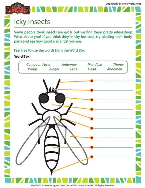 free printable insect worksheets for 2nd grade icky insects worksheet 2nd grade life science school of dragons
