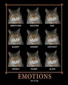 cat emotions cat emoticons really ghey