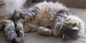 Blutflecken Aus Teppich Entfernen : katzenhaare entfernen katzenhaare entfernen teppich popular runder teppich ~ Watch28wear.com Haus und Dekorationen