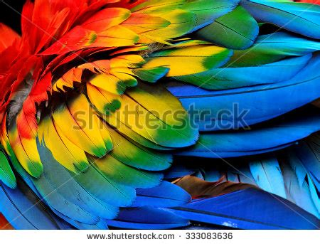 bird with colorful feathers colorful scarlet macaw birds feathers stock photo