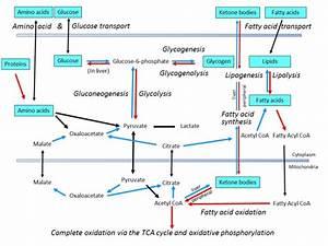 Key Diagrams For Biology Olympiad