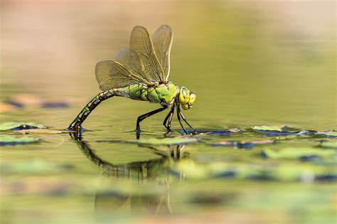 insect macro photography tips amateur photographer