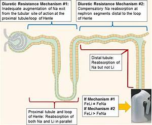 Compensatory Distal Reabsorption Drives Diuretic