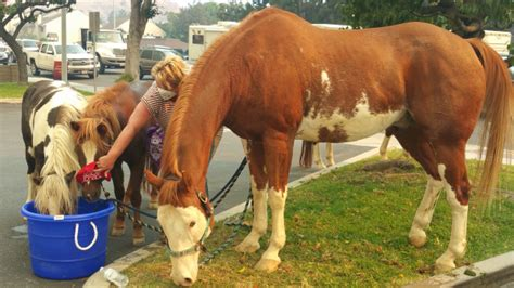 canyon fire   depend   equestrians