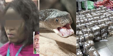 """""""a Mystery Snake Swallowed The N36m Cash In Jamb Office"""