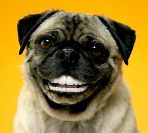 Say Cheese! Caring for Your Dog's Teeth 101