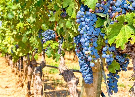 french wineries wine  france wine regions  france