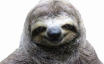 Sloth Transparent Sloths Animal Clipart Clip Toed