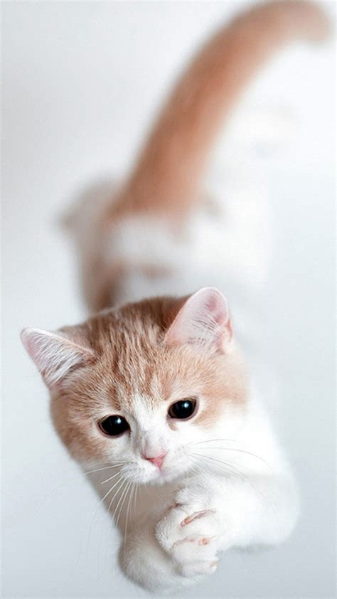 Cute Cat Wallpapers (67+ Images