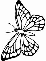 Butterfly Coloring Clip Drawing Line Kindergarten Birds Worksheet Outline Monarch Pages Fly Guide sketch template