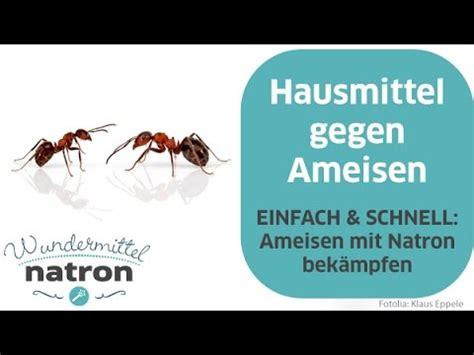 natron gegen ameisen ameisen bek 228 mpfen mit natron