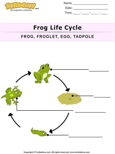 life cycle   frog  kids worksheet turtle diary