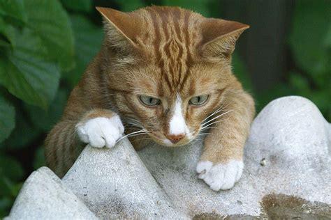 Can You Shower A Cat - threats and dangers of bird baths