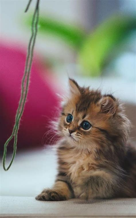 Cat Kittens Live Wallpaper  Android Apps On Google Play
