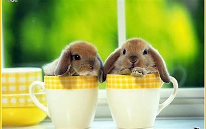 Rabbit Wallpapers Bunny Bunnies Cave