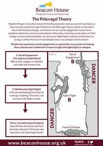 Afbeeldingsresultaat Voor Polyvagal Theory Diagram