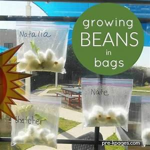Growing Beans in Baggies | SPRING THEME for PRESCHOOL ...
