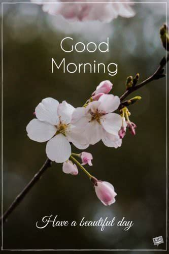 fresh inspirational good morning quotes   day