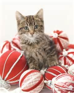 Merry Christmas Cat Clip Art