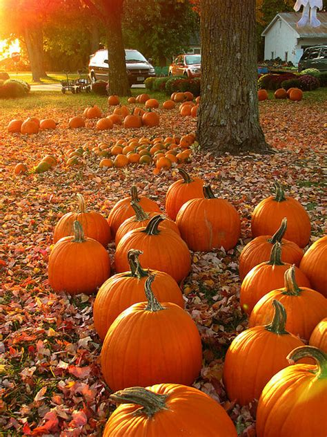Pumpkin Patch Rochester New York by Hello October You Are So Cool