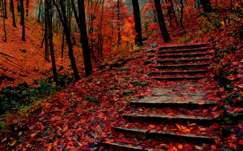 fallen autumn leaves   stone stairs widescreen