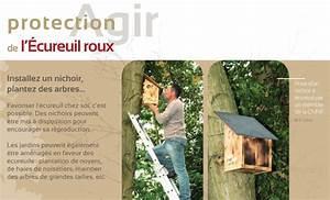 Comment Construire Une Cabane à écureuil : comment fabriquer une maison pour ecureuil ventana blog ~ Melissatoandfro.com Idées de Décoration