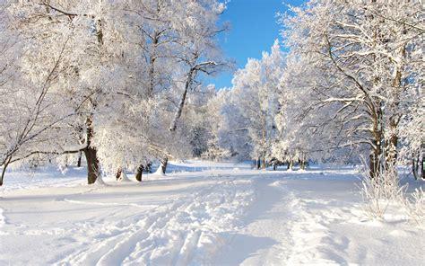 3d Winter Wallpaper by White Color On The Nature 3d Nature Wallpaper