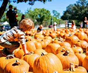 Top Pumpkin Patches Near Houston for Fall Fun ...