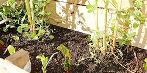 V U00e9g U00e9taliser Li U00e8ge Avec Des Plantes Comestibles