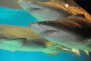 New Year, New Shark Nursery - New York Aquarium