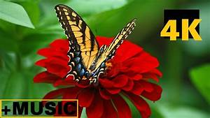 Flowers And Insects In 4k Video With Comfortable Theme