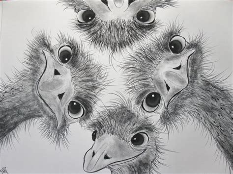 animal drawings  charcoal google search art