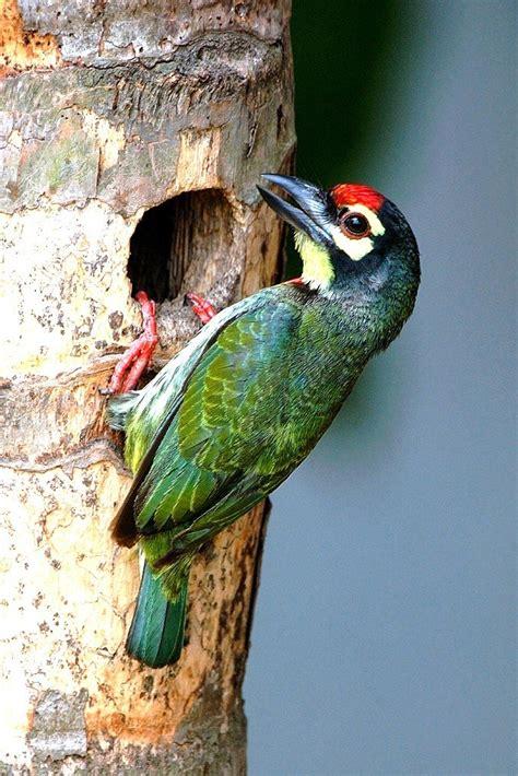 common garden birds  india part ii greenmylife