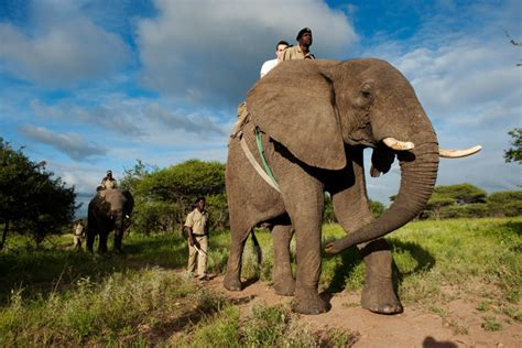 Tips For The First Time At A South African Safari  Tierra. Top 10 Water Softener Systems. American Plumbing Des Moines What Is A Tmj. Employee Engagement Training Activities. Business Service Management Software. Construction Project Management Training. Life Insurance Quotes Term Kobe Beef New York. Seo Optimized Wordpress Themes. The Best Logo Design Company