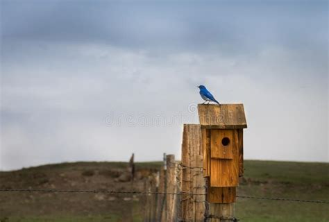 rustic birdhouse stock image image  weathered nature