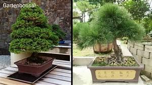 Bonsai Pflege Für Anfänger : gartenbonsai fern stliche sthetik dank outdoor bonsai ~ Frokenaadalensverden.com Haus und Dekorationen