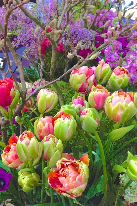 1920x1080 beautiful tulips garden 596 best images about spring gardens on pinterest gardens yellow tulips and the netherlands