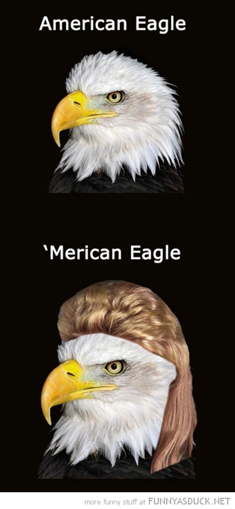 America Meme Eagle - funniest bald eagle meme compilation america
