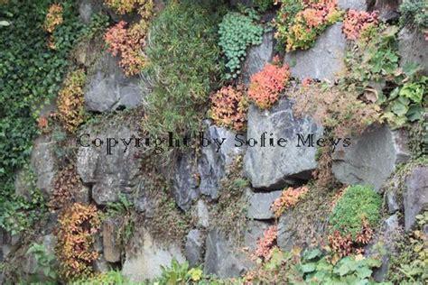 pflanzen für trockenmauer garten