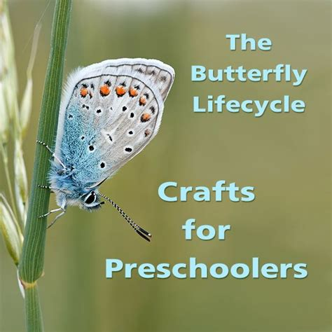 green home plans how to preschool caterpillar and butterfly crafts for