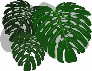 Clipart - Philodendron