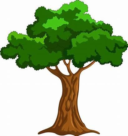 Tree Cartoon Transparent Clip Reading Naomi Clipart